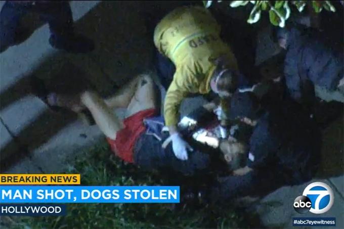 Ryan Fischer - người chăm chó cho Lady Gaga - bị bắn bốn phát vào ngực và đã được đưa đi cấp cứu.
