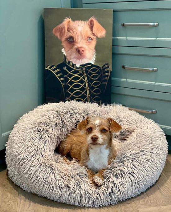 Cô dành cho cún cưng một chỗ ở riêng xinh xắn.