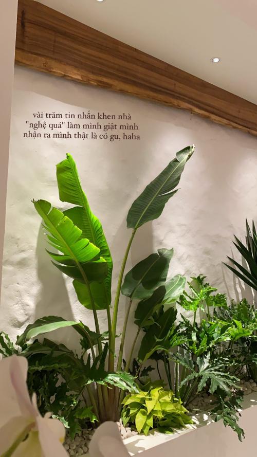 Phía sau bộ sofa là khoảng đất để trồng các loại cây cảnh chịu hạn tốt, không ưa nắng. Cây cũng giúp điều hòa không gian sống, tạo cảm giác thoải mái, dễ chịu khi gia chủ bước vào trong nhà.