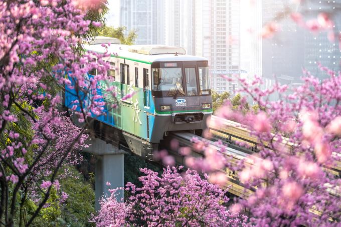 Thời tiết ấm áp dịp Tết Nguyên đán là điều kiện thuận lợi để hoa đảo nở rộ khắp các quốc gia châu Á, trong đó có Trung Quốc. Sắc hồng rực rỡ phủ khắp những danh thắng nổi tiếng ở đất nước tỷ dần từ Bắc xuống Nam, thu hút đông du khách tham quan, thưởng hoa.