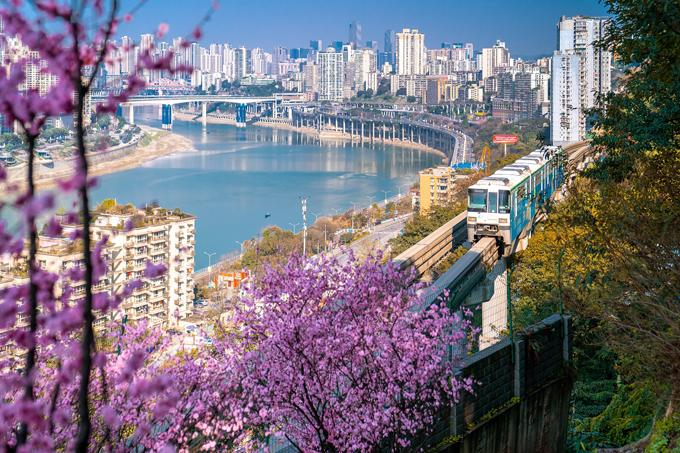 Khi thời tiết ấm lên ở thành phố Trùng Khánh phía tây nam Trung Quốc, hoa đào Armeniaca mume nhuộm hồng một đoạn đường sắt Fotuguan tuyến số 2. Những đoàn tàu đi qua biển hoa, phía xa là sông Gia Lăng, tạo nên một hình ảnh đẹp như phim hoạt hình.