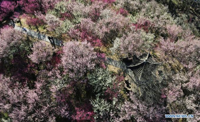 Hoa đào đủ sắc độ từ hồng nhạt, hồng phớt cho tới hồng đậm tạo nên bức tranh xuân rực rỡ ở khu thắng cảnh Zhuyuwan ở Dương Châu, tỉnh Giang Tô phía đông Trung Quốc.