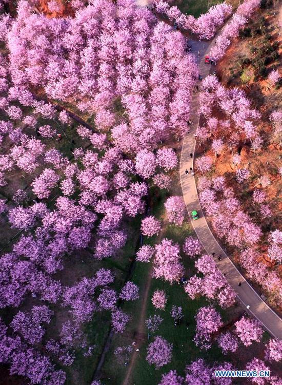 Hình ảnh được chụp từ trên cao vào ngày mùng 8 Tết khi du khách đến tham quan làng Miêu Sơn thuộc Trường Ninh, tỉnh Hồ Nam, miền trung Trung Quốc.