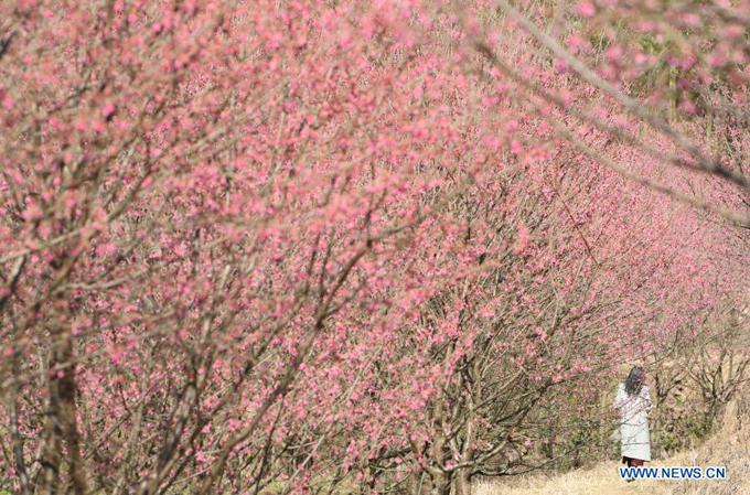 Hàng Châu là một trong những thành phố du lịch nổi tiếng nhất ở Trung Quốc. Nhiệt độ ấm lên làm hoa đào nở rộ khắp nơi ở vùng đất Giang Nam xưa, đón khách tới du xuân.