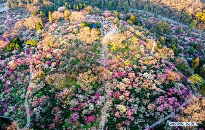 Ảnh chụp từ trên không của khu thắng cảnh Meihuashan ở Nam Kinh, tỉnh Giang Tô phía đông Trung Quốc, ngày 21/2. Khu thắng cảnh này thu hút rất nhiều khách du lịch khi những cây mận, cây đào nở hoa vào đầu mùa xuân, tạo nên bức tranh xuân nhiều màu sắc.