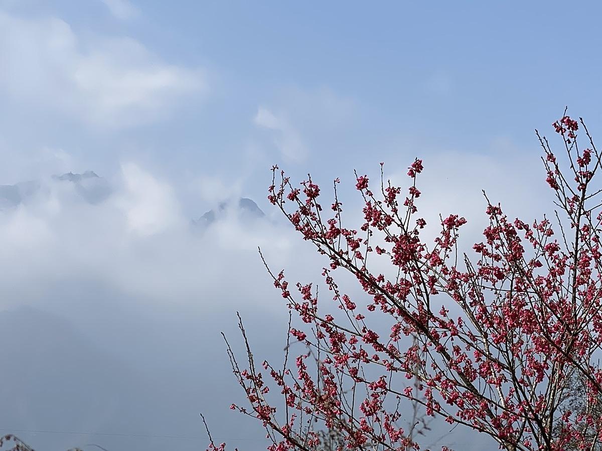 Trên hành trình cáp treo vượt mây tìm đến chiêm bái đỉnh Fansipan huyền bí, hoa đào rừng Sa Pa cũng đã nở khắp rừng Hoàng Liên, mang đến một khung cảnh mãn nhãn trên miền tiên cảnh, khi sắc hồng của hoa điểm giữa mây trắng bồng bềnh tuyệt đẹp.