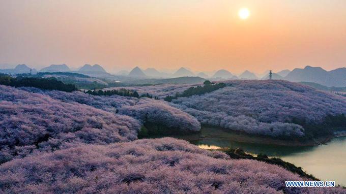 Đảo đào hoa là tên gọi của nông trại thuộc huyện Guian, tỉnh Quý Châu (Trung Quốc). Vài năm gần đây, nông trại này trở nên nổi tiếng là điểm tham quan, ngắm hoa mùa xuân. Khung cảnh vào mùa hoa nở được ví như bước ra từ trong phim hoạt hình.