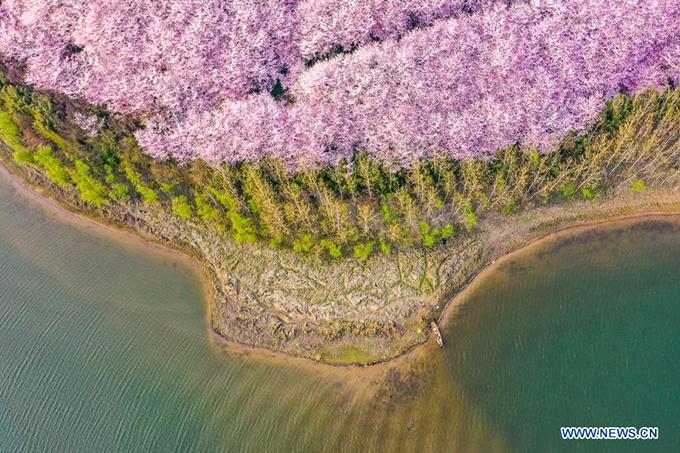 Bao quanh đảo đào hoa là hồ nước nhân tạo, nước trong xanh, du khách có thể thuê thuyền đi dạo giữa khung cảnh hoa nở rực rỡ của mùa xuân.