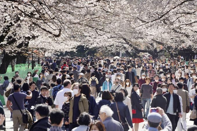 Mùa hoa anh đào năm 2020 mọi người ra đường đều đeo khẩu trang. Ảnh: Japan Times