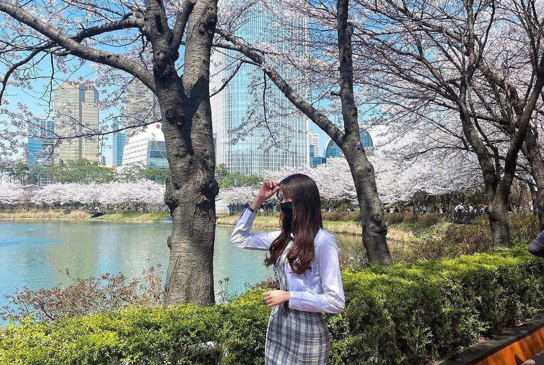 Hoa đào ngập công viên 32 tuổi ở Seoul - 6