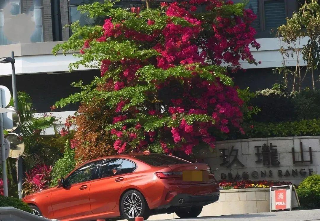 Xe của Cao Hải Ninh ra vào tại khu Dragon Mountain, cho thấy cô hiện sống tại đây.