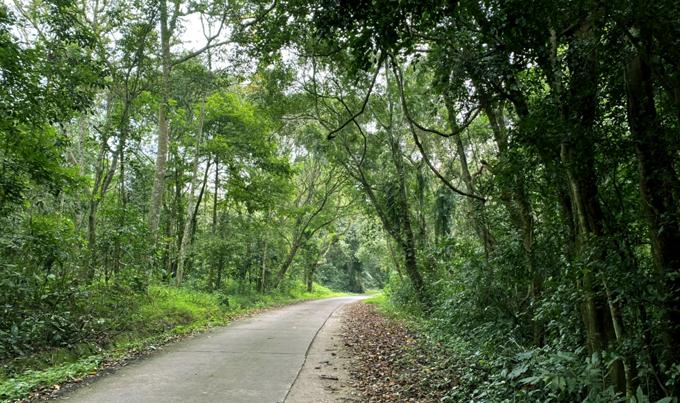 Những con đường xanh mướt trong vườn quốc gia Cúc Phương.