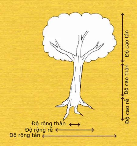 Vẽ cây, đoán tính cách
