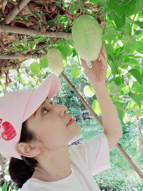 Trong vườn còn có những trái dưa tây - loại quả trong ký ức tuổi thơ của Việt Trinh. Quả dưa tây dầm sữa ăn kèm chút đá bào cũng là món ngon cho mùa hè.