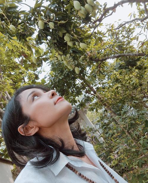 Cô cũng trồng cây xoài trong vườn nhà. Việt Trinh ví von đây là cây xoài Thạch Sanh vì từ hồi tháng 3 tới nay, cô đã thu hoạch được hai đợt xoài, lần nào cũng đầy ắp các rổ mà cây vẫn tiếp tục trổ trái.