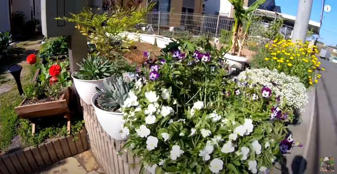 Cô trồng nhiều loại hoa làm cảnh cho vườn nhà thêm sinh động.