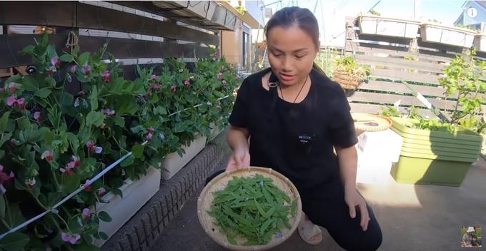 Quỳnh và bé Sa thu hoạch được đậu đầy kín mẹt tre.