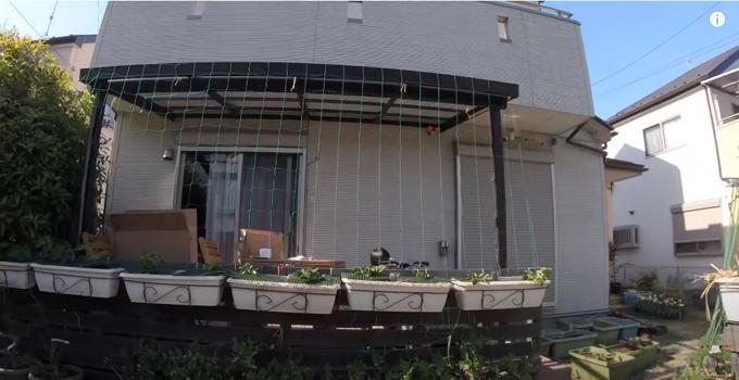Quỳnh đang dựng một giàn chậu và giàn lưới để trồng bầu, mướp trước cửa nhà.