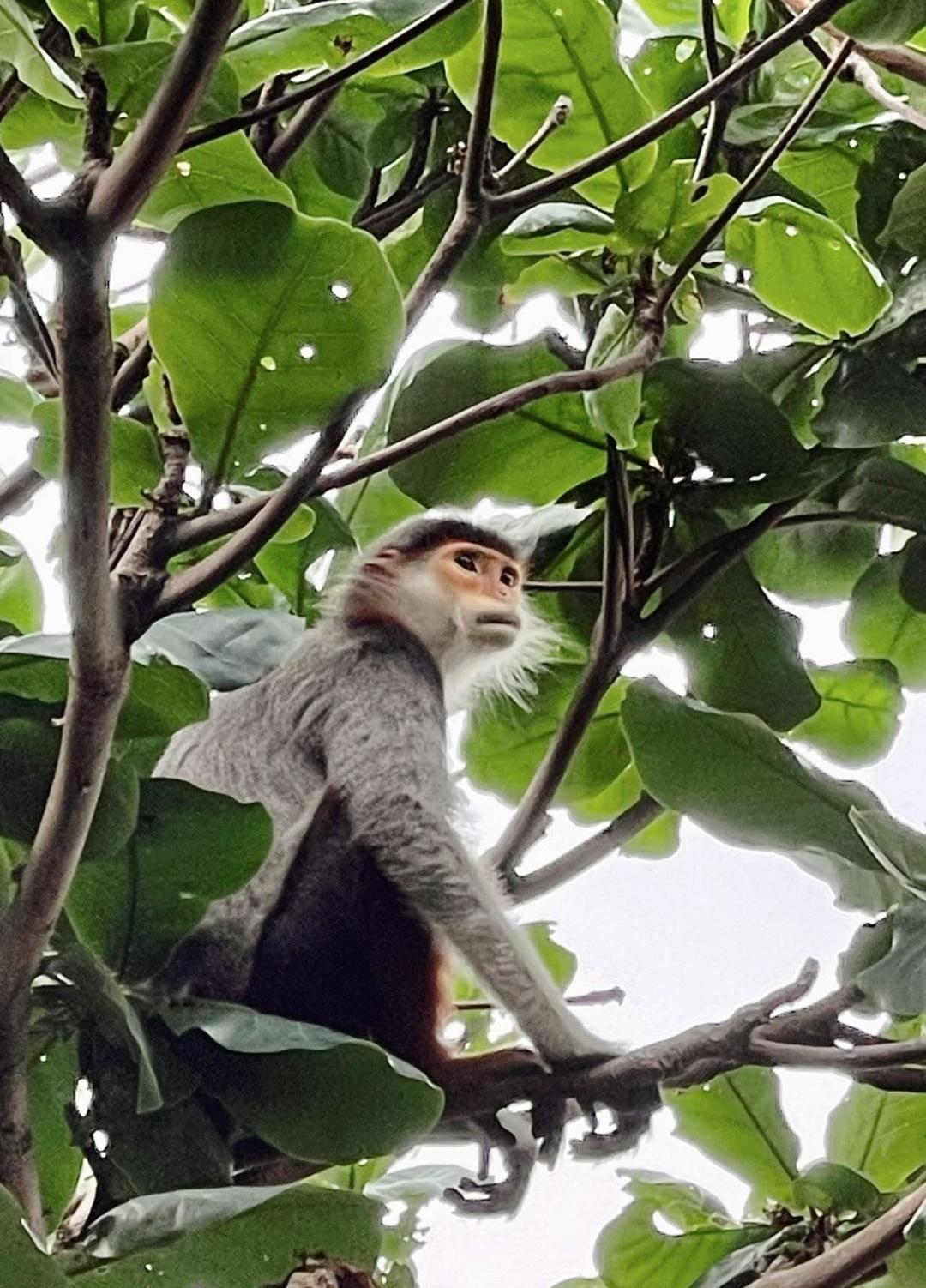 Bảo Thy thích thú khi ở chung với khỉ hoang trong resort - 1