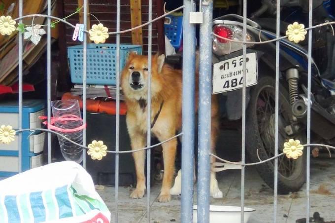 Con chó được những người hàng xóm tốt bụng cho thức ăn, nước uống trong khi chờ người nhà trở về. Ảnh: Viral Press.