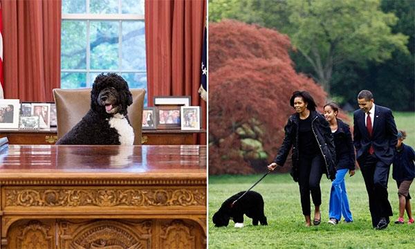 Cún cưng Bo đồng hành cùng gia đình Obama suốt thời gian hai nhiệm kỳ ông làm tổng thống Mỹ. Ảnh: Hello.