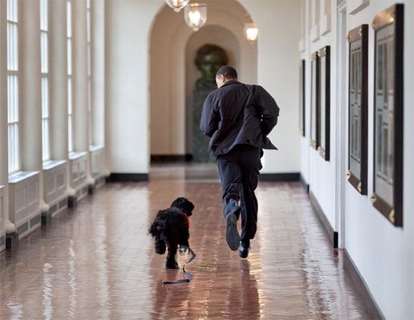 Cựu tổng thống Obama đăng ảnh chạy ở hành lang Nhà Trắng với Bo và viết lời vĩnh biệt cún cưng. Ảnh: Twitter.