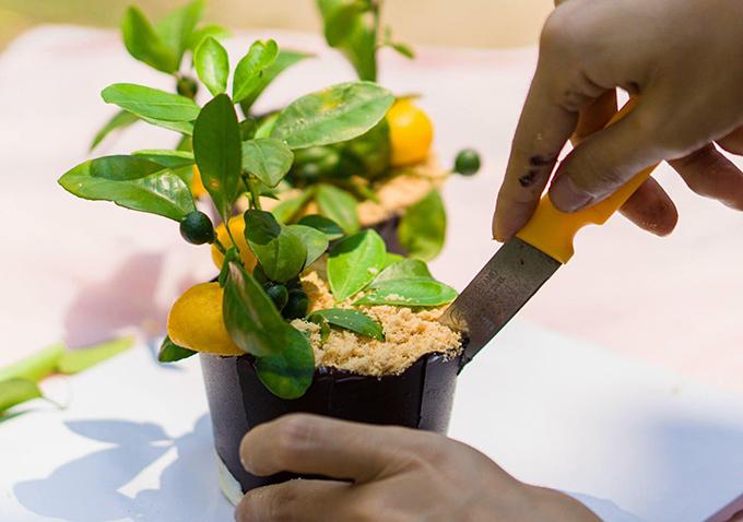 Phần bánh chậu cây có 3 lớp. Mỗi lớp dùng 3 gr gelatin ngâm với 15 ml sữa tươi trong 15 phút, sau đó đun chảy trong một chén nước nóng. Mỗi lớp đổ cách nhau 30 phút.