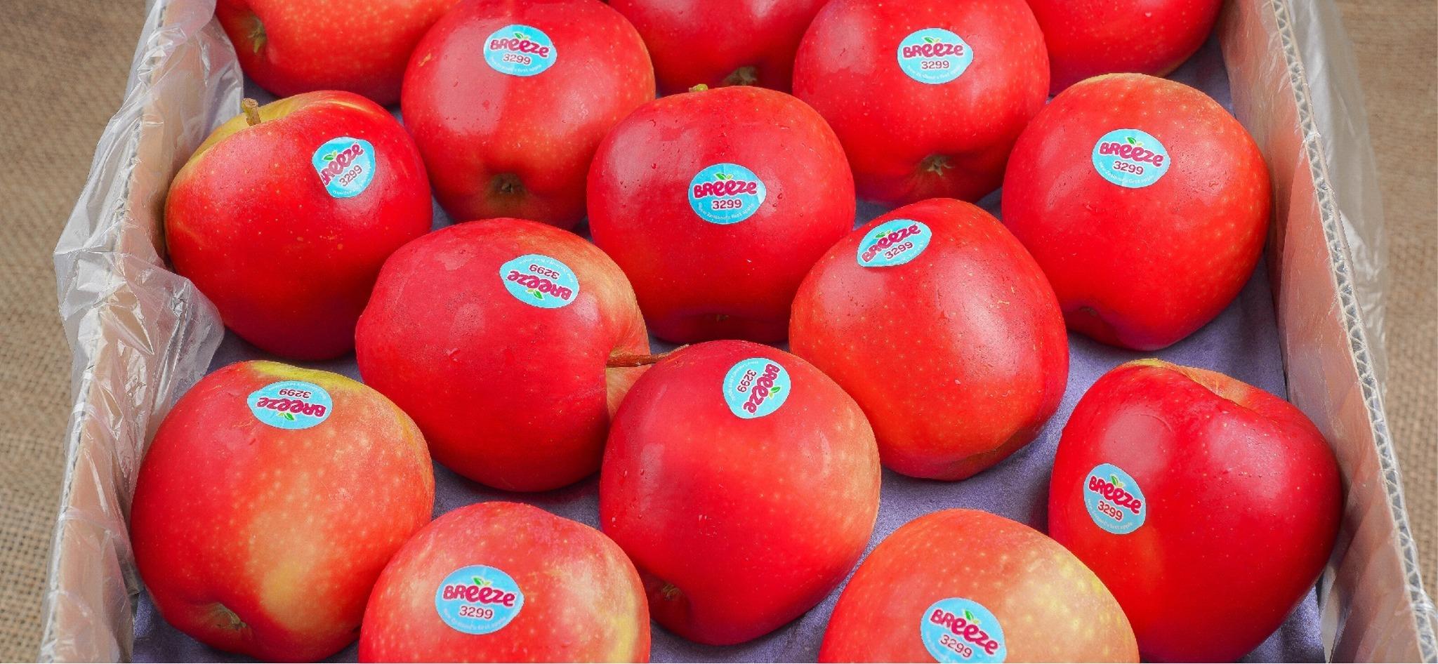 Một kg táo Breeze New Zealand từ Tony Fruits hiện có giá chỉ 66.500 đồng trên sàn thương mại điện tử Lazada, giảm đến 30% so với giá gốc 95.000 đồng. Xem thêm thông tin và đặt mua tại đây. Ngoài ra loại táo vàng Kinsey của Nhật cũng đang có giá ưu đãi, giảm từ 250.000 đồng còn 175.000 đồng một kg. Đặt mua tại đây.
