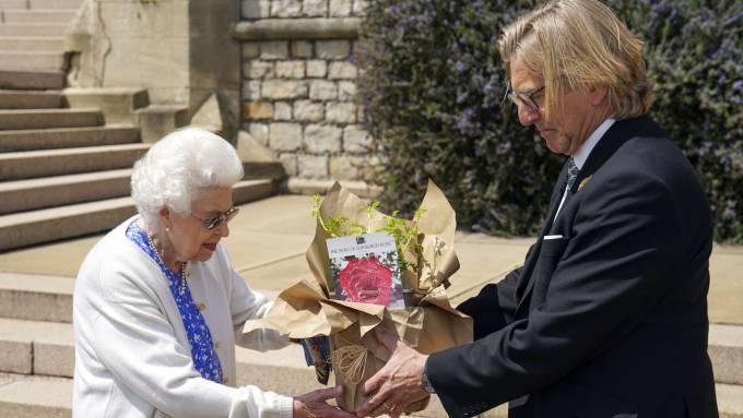 Nữ hoàng nhận giống cây hoa hồng mới lai tạo mang tên Công tước xứ Edinburgh. Ảnh: Sky News.