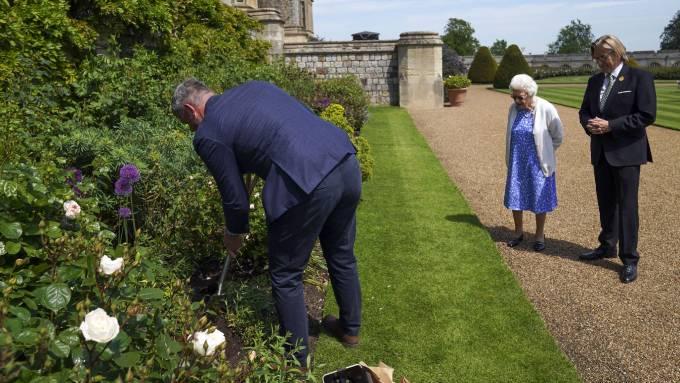 Phụ trách làm vườn Windsor trồng cây hoa hồng Công tước xứ Edinburgh trong khuôn viên lâu đài. Ảnh: PA.