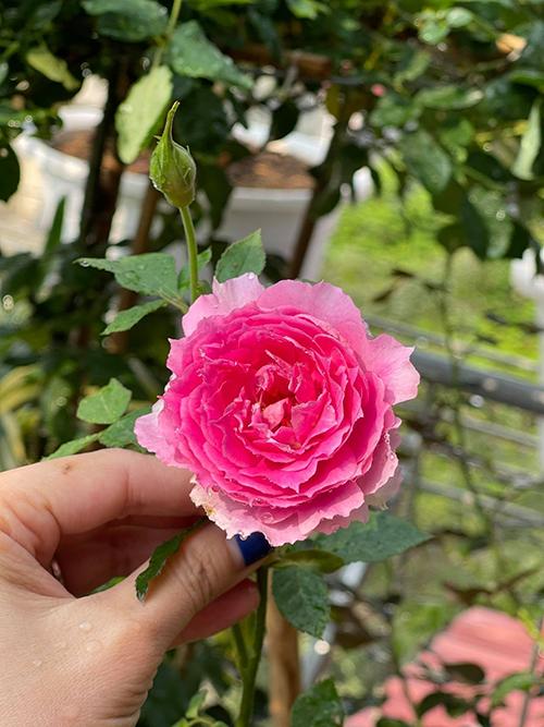 Được ngắm từng nụ hoa dần lớn tới khi nở thành đoá hoa rực rỡ, Hà Minh Phúc cảm nhận niềm vui sống mỗi ngày.