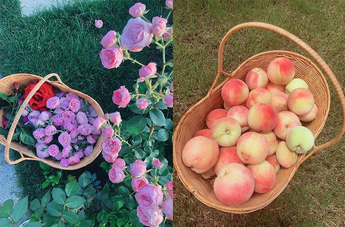 Nhờ việc dành nhiều tâm huyết cho vườn mà Hinh Dư thu được rất nhiều hoa thơm. Cô còn dành diện tích để trồng trái cây, rau củ quả phục vụ nhu cầu hàng ngày.