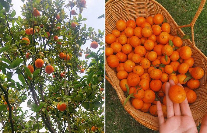 Nếu thu hoạch trái mà ăn không hết, Hinh Dư sẽ đem biếu bạn bè, người thân.