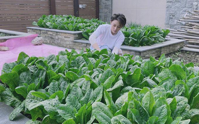 Bên cạnh hoa quả, Hinh Dư trồng nhiều loại rau khác nhau như rau diếp, tỏi tây, súp lơ, tỏi tây, măng...