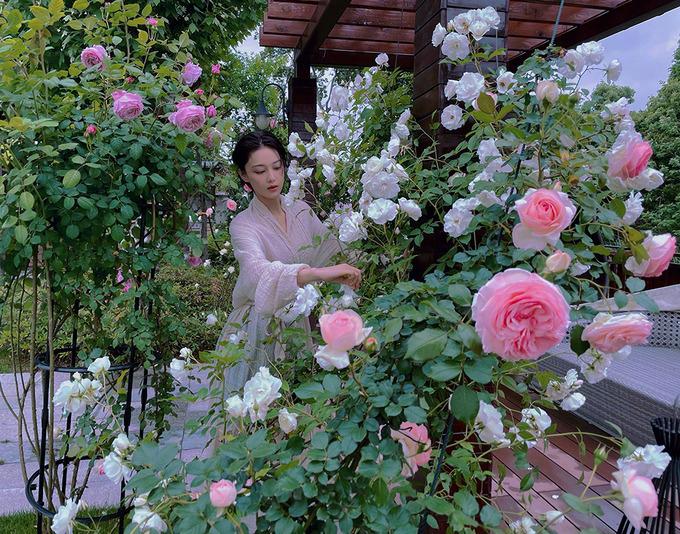 Trương Hinh Dư, vốn nổi tiếng qua hàng loạt bộ phim như Thần điêu đại hiệp, Võ Tắc Thiên, Tinh trung Nhạc Phi, Lộc Đỉnh Ký, Tiểu nữ hoa bất khí... có cho mình sở thích làm vườn để thư giãn sau những giờ làm việc liên tục. Giàn hoa hồng cô trồng vào tháng 3 năm ngoái giờ đã trổ bông xanh tốt, mỗi đóa to như chén uống nước.