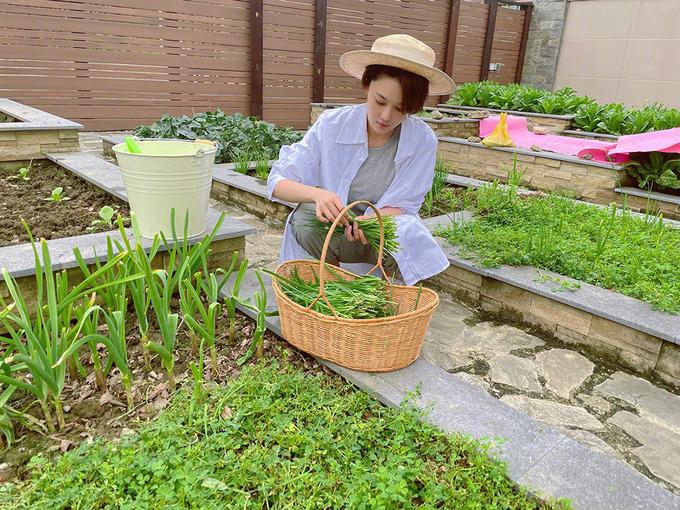 Với mỗi loại cây, rau trong vườn, Hinh Dư đều tìm hiểu kỹ lưỡng tác dụng của chúng tới sức khỏe rồi mới trồng đại trà.