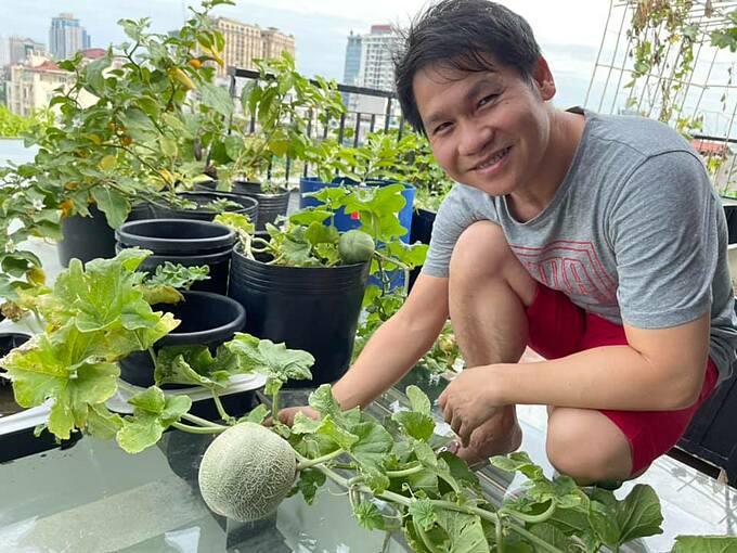 Ca sĩ Trọng Tấn thu hoạch dưa lưới trồng trên sân thượng của gia đình.