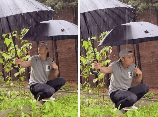 Tạ Đình Phong che ô cho vườn rau.