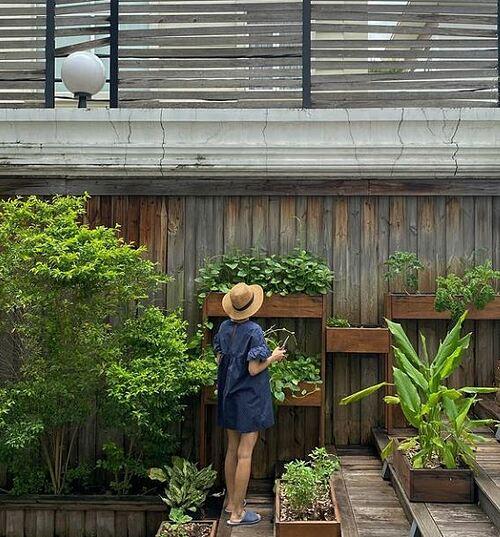 Tăng Thanh Hà thu hoạch rau trong vườn nhà để chuẩn bị bữa ăn cho gia đình.