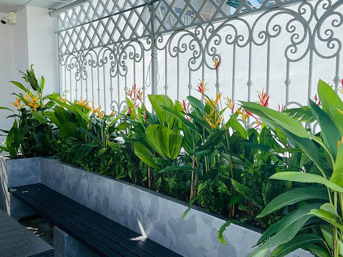 Mảng tường lớn của sân thượng được phủ xanh bằng các loại cây như thiên điểu, cọ, dương xỉ...