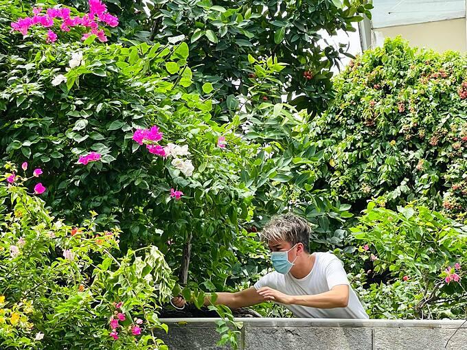 Đàm Vĩnh Hưng mất nhiều tiếng đồng hồ để cắt tỉa cây cảnh và thu hoạch mận nhà trồng.