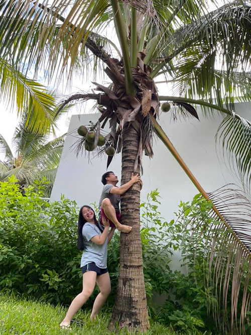 Ca sĩ Trọng Tấn được con gái hỗ trợ để trèo cây hái dừa trong vườn.