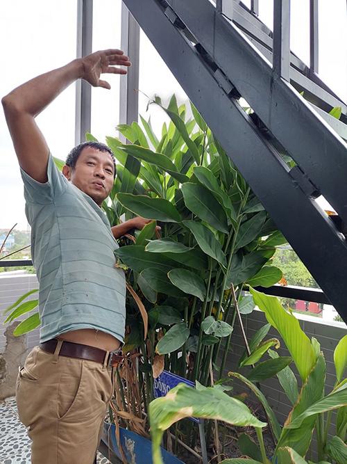 Anh Huynh tận dụng khoảnh sân dưới gầm cầu thang để trồng các loại cây gia vị.