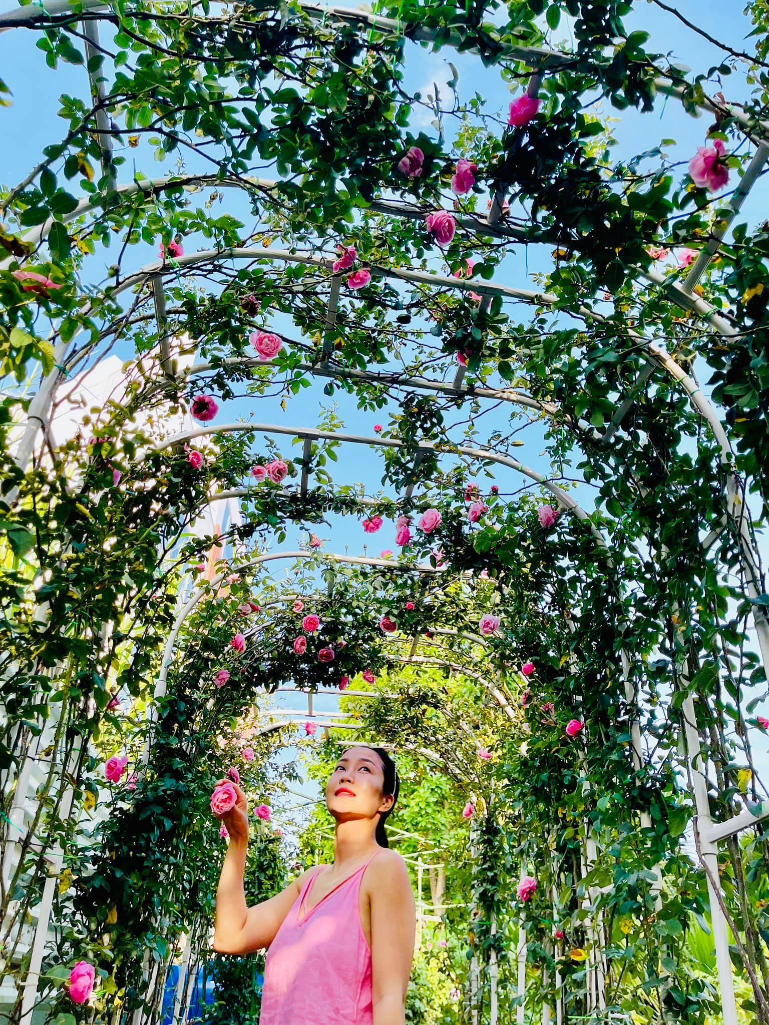 Ốc Thanh Vân bên dàn hoa hồng leo Pháp Emmanuelle nhà trồng bung nở, trông như nhà có cổng hoa đám cưới.