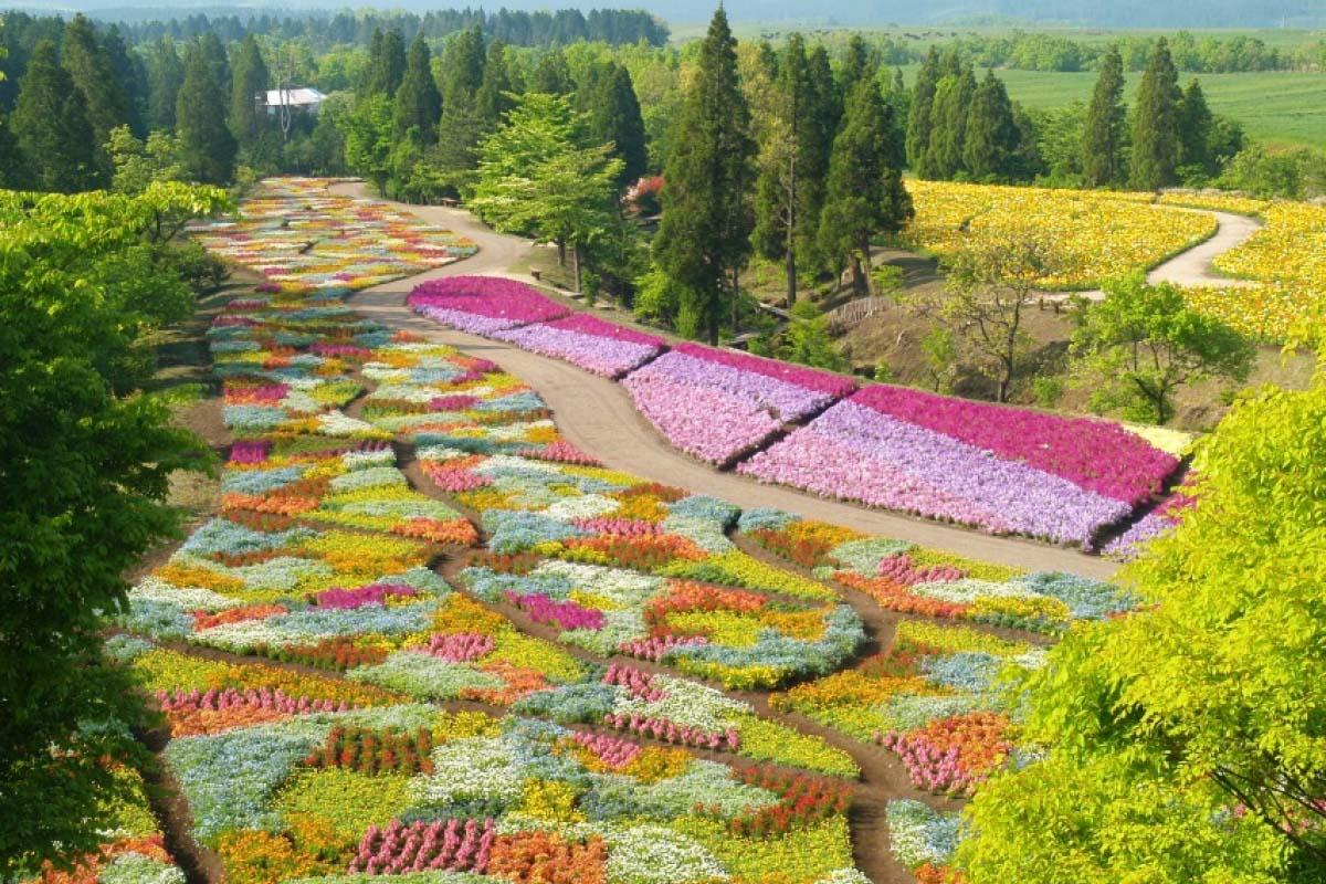 Công viên Kuju nằm ở cao nguyên Kuju trong thành phố Takeda, tỉnh Oita, đảo Kyushu, Nhật Bản. Đây là một trong những công viên hoa lớn nhất ở đất nước mặt trời mọc, với hơn 3 triệu cây hoa thuộc 500 giống loài khác nhau, bung nở khoe sắc suốt 3 mùa xuân - hạ - thu và chỉ bị gián đoạn vào mùa đông do thời tiết lạnh giá. Ảnh: ZEKKEI Japan