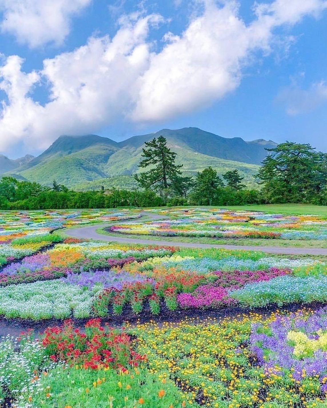 Vào những ngày trời quang, du khách có thể thưởng ngoạn khung cảnh tuyệt đẹp của thảm hoa background là dãy núi Kuju. Giữa các luống hoa, các nghệ nhân tạo ra những con đường đất quanh co, uốn lượn mềm mại, khiến nơi đây giống như chưa từng bị can thiệp bởi bàn tay con người.