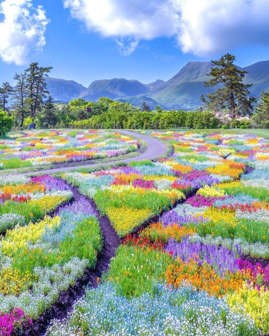 Trong khuôn viên với diện tích rộng khoảng 220.000 m2, du khách có thể chiêm ngưỡng đủ loài hoa với mọi màu sắc từ xanh - đỏ - tím - vàng - hồng... Từ tháng 4 đến tháng 5 là mùa hoa tulip còn từ tháng 6 đến tháng 8 là mùa hoa shibazakura. Cuối tháng 9 đến đầu tháng 11, khoảng một triệu bông hoa chi cúc chuồn - cosmos bung nở. Ảnh: astrailor_jp