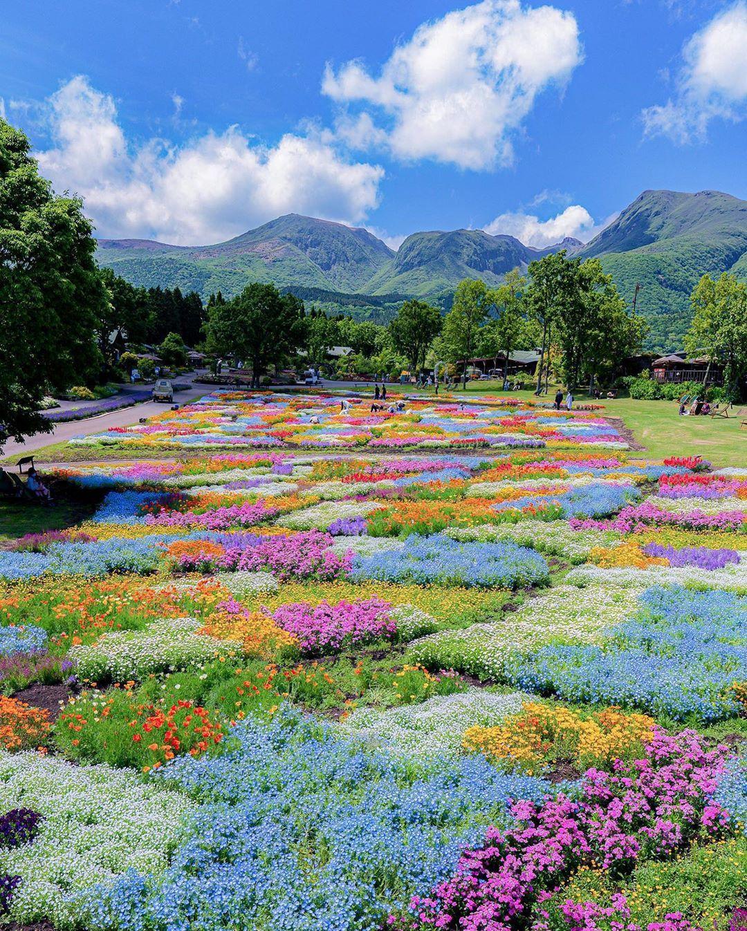 Điểm đặc biệt của công viên này là thay vì quy hoạch ngay hàng thẳng lối mỗi giống hoa ở một khhu vực riêng biệt, tạo hình ngay ngắn thì những nghệ nhân ở Kuju lại trồng hoa theo phong cách tự nhiên, hoang dã. Hoa màu này xen lẫn hoa màu khác, tạo nên thảm hoa sặc sỡ, đầy sức sống.