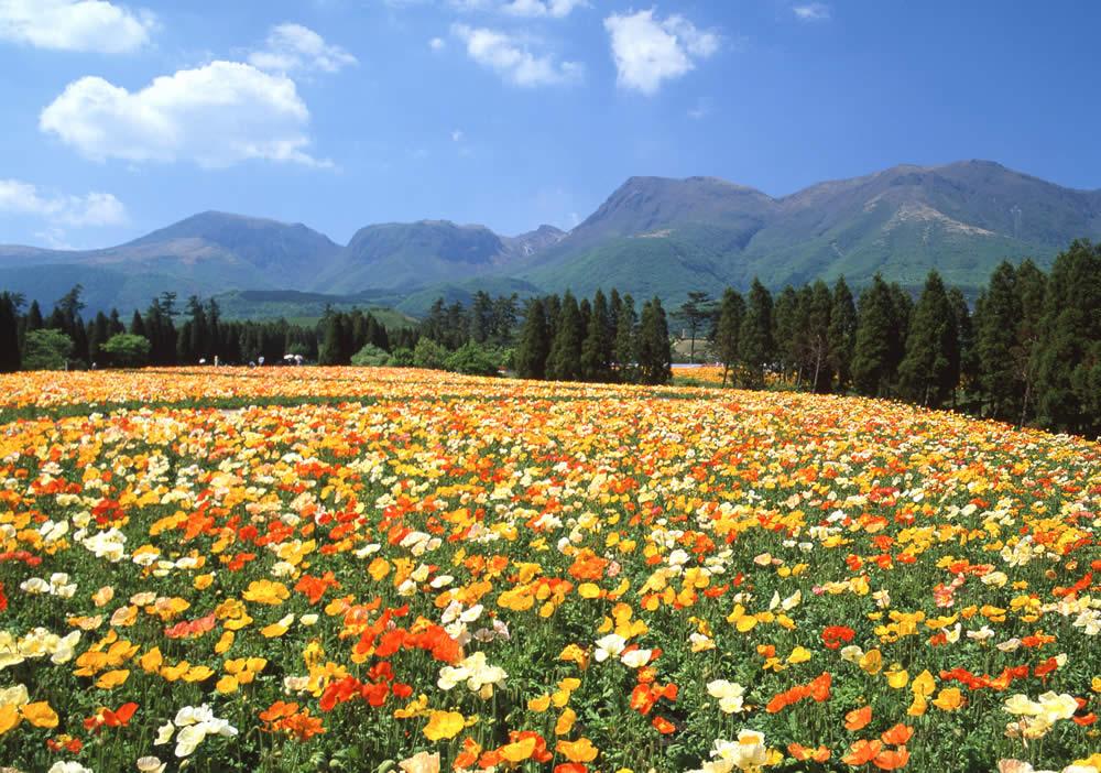 Công viên còn có một nhà kính trưng bày các loài thực vật nhiệt đới như thu hải đường và một số cửa hàng lưu niệm bán các sản phẩm có hương thơm hoặc làm từ thực vật. Ảnh: Travel Taketa