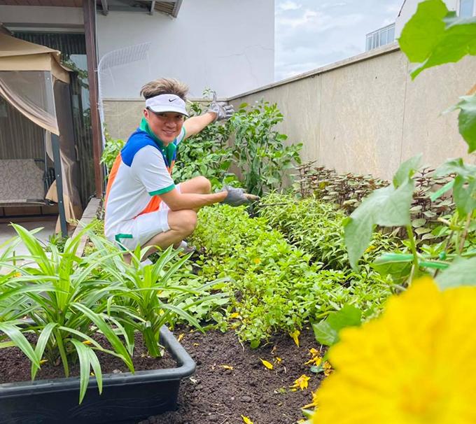Đàm Vĩnh Hưng chăm sóc vườn rau sạch của gia đình.